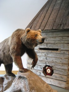 Teddy at Anchorage Museum