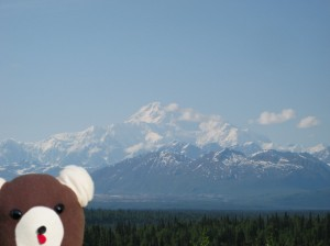 Teddy at Mt McKinley