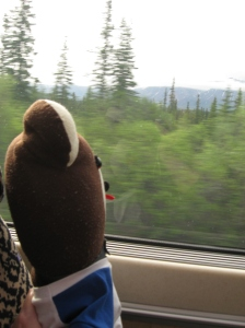Teddy on train