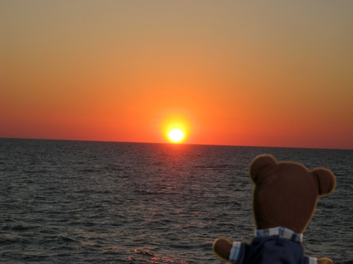 Teddy on Sunset Cruise